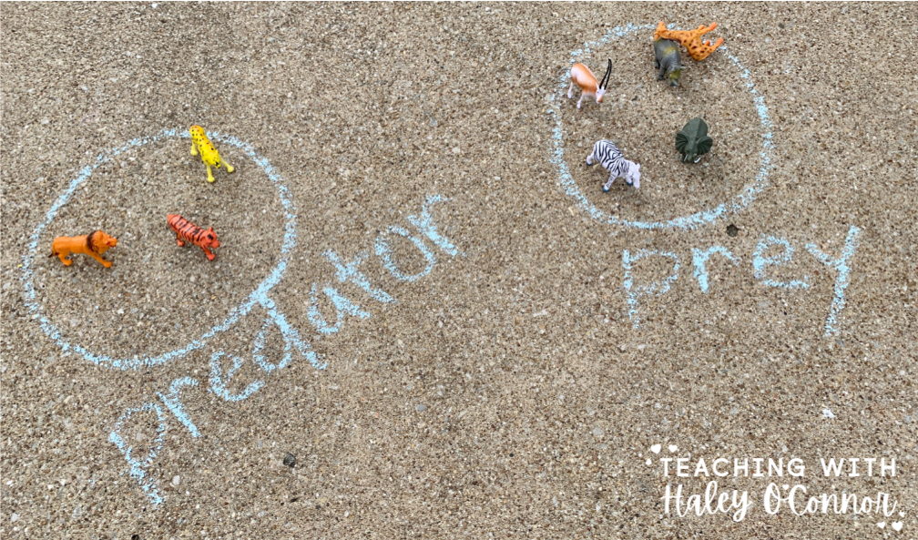 predator and prey sort. Kids science lesson with chalk.
